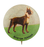 Boston Terrier Art Button Museum